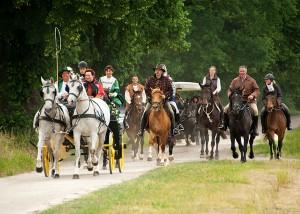 Hochzeit Mittelalter Pferde