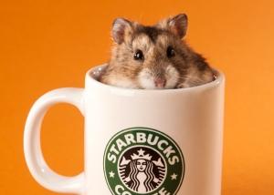 Tier - Portrait Hamster in Tasse