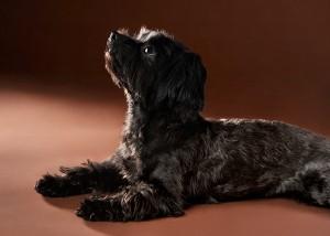 Tier-Portrait im Profil