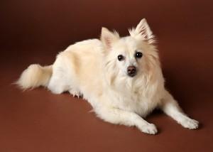 Hund - Portrait