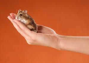 Tier - Portrait mit Hamster