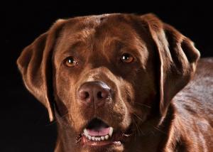Tier - Portrait Hund Nahaufnahme