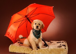 Tier - Portrait mit Hund und Schirm