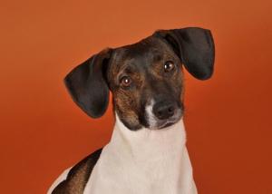 Tier - Portrait Hund